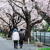二人で見る50年目の桜
