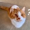【猫学】愛猫のワクチン接種は一年に一度が最適か?かかりつけの獣医さんに聞いてみた。