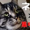 【猫で集中力の効果?】ネコと仕事の意外な関係性?