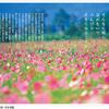 「休むのがへた」だと感じたら 「老子の言葉が散りばめられた写真集 『Taoist Saying』シリーズ」