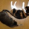今日は久しぶりに我が家でゆっくりしています。猫ちゃんが面白い!