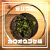 苔リウム・プロジェクト(KP)②【ホウオウゴケ編】