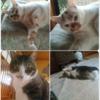 実家の猫さまたちの写真を加工していました
