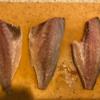 千葉県富津沖でアジの泳がせ釣り