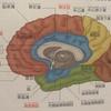 【生理学Ⅱ-12】大脳基底核