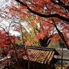 2019、晩秋の奈良(1)。紅葉。瑜伽(ゆうが)神社。奈良春日野国際フォーラム。