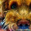 My pet lovely dog TiAmo