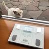 ぶささんの体重を量ってみた!