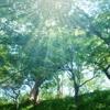 第87歩:森の匂い