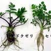 誤食に注意!間違えやすい山菜と毒草9選