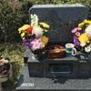 月命日・お墓でお花見🌸