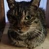 猫の糖尿病大変。ほんとに大変