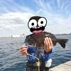 【釣れた!!】3度目の落とし込みチヌin鳥浜