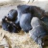 【上野動物園】1日中遊んで学べるスポット