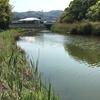 日向市吉野川でハヤ釣りに行ってきました^^