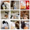 猫さんの応援写真が増えました!「ちびねこ亭の思い出ごはん」2020年12月18日までのInstagram投稿分