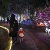 イルミネーション好きの娘のためにクリスマスツリーを出しました