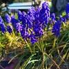 春の花〜💮
