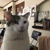 うちの猫たちだよ😺