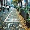御池の落ち葉・京都・コニカC35