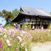 【奈良】「コスモス寺」から秋のお便り(般若寺)+正倉院展