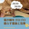 猫がゴロゴロと喉を鳴らすのはどんな時?人にもうれしい効果があった