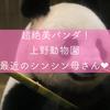 【上野動物園】超絶美パンダ!最近のシンシン母さん