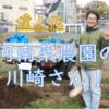 【偉人伝】河南菜農園の川崎さん