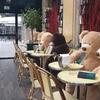 """閑散としたパリのカフェ 3度目の外出禁止令で""""熊""""が占拠"""