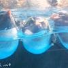 【観光】ランカウイの水族館 アンダーウォーター・ワールドに行ってきた!女一人旅行記