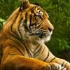 虎だ!お前は虎になるのだ!!