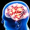 """ぼけ~と生きたもん勝ち(笑) ◆ 「NHKスペシャル 第5集 """"脳""""すごいぞ!ひらめきと記憶の正体」"""