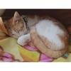 【猫画像】猫のいる生活は癒しである【日記】
