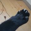 今日の黒猫モモ&白黒猫ナナの動画ー979