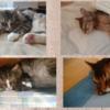 秋の訪れとともに猫の睡眠は深まります!癒される寝顔写真を集めてみました