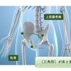 骨盤チェック〜骨盤と姿勢の関係 / 骨盤の歪み〜
