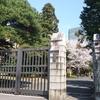 仙台 片平キャンパス 桜満開