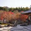 圓光寺で終盤の色付く紅葉を楽しむ@2020