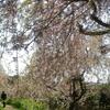 4つの花園を巡りました!(2)