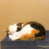 【愛猫日記】毎日アンヌさん#79
