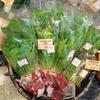 山形県の  お野菜で