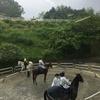 土曜日、雨と馬