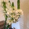 好きな花:オオフキカヅラ