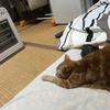 猫の学習能力は高いのか低いのかよう分からん