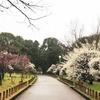 2月はやっぱり梅!堺市の荒山公園へ