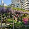 亀戸天神の藤の花情報【ポケモンGOAR写真】ニャスパーは藤色だと思います!