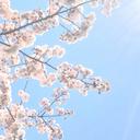yuriの花束