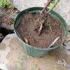 2012/05/09 たぶん黄金虫の幼虫がいそうな土の表面の様子