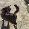 4-114   グレコ家猫日記〜明日を生きる〜
