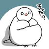 長期、風邪を引いています~、なかなか治らないのでブログの更新も滞ります